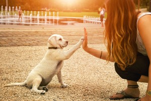 youth-time-life-fun-dog-language-title